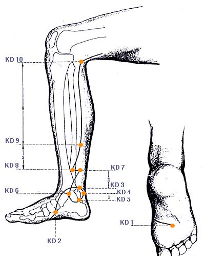 Diagram of the Kidney Meridian through the leg and foot