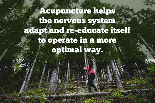 Acupuncture trains the nervous system to operate optimally.